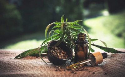 CBD oil and its beneficial effects on the body